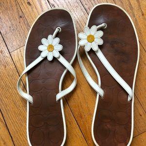 Coach daisy flip flops
